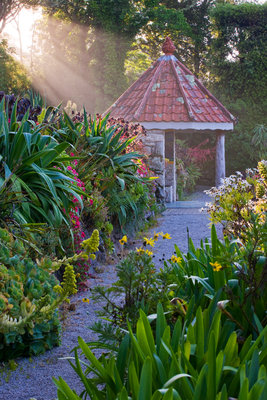 Tresco Abbey Garden, Tresco, Isles Of Scilly Wall Art & Canvas Prints by Clive Nichols