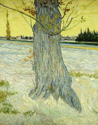 The Old Tree Wall Art & Canvas Prints by Vincent Van Gogh