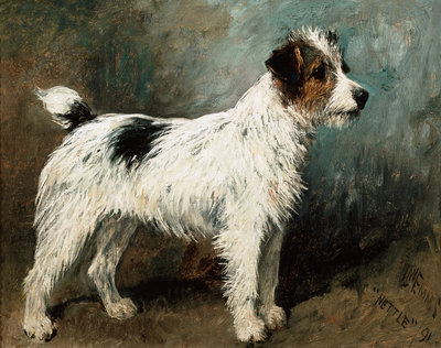 A Portrait of Nettle, A Terrier Postcards, Greetings Cards, Art Prints, Canvas, Framed Pictures, T-shirts & Wall Art by John Emms