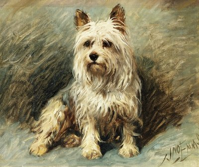Yorkie Postcards, Greetings Cards, Art Prints, Canvas, Framed Pictures, T-shirts & Wall Art by John Emms