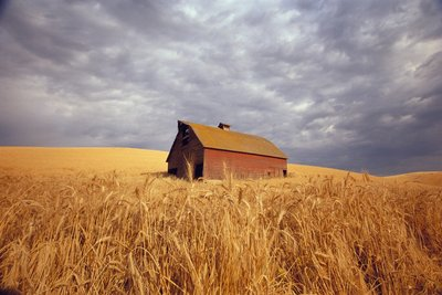 Old Barn Amidst Wheat Field Wall Art & Canvas Prints by Craig Tuttle
