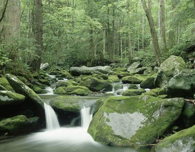 Roaring Fork River in Tennessee, USA Wall Art & Canvas Prints by Pat O'Hara