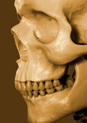 Profile of Human Skull Wall Art & Canvas Prints by Anonymous
