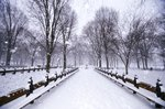 Central Park in winter Wall Art & Canvas Prints by Anonymous