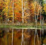 Autumn Colour Reflected in a Beaver Pond, Point Au Baril, Ontario, Canada. Postcards, Greetings Cards, Art Prints, Canvas, Framed Pictures, T-shirts & Wall Art by Edward Wilkins Waite