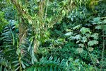 Rainforest, Costa Rica Wall Art & Canvas Prints by William Ireland