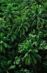 Lush Plants in Hawaiian Rainforest Wall Art & Canvas Prints by William Ireland
