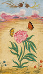 Mughal Miniature Painting Depicting a Peony with Birds of Paradise and Butterflies Wall Art & Canvas Prints by Emily Stannard