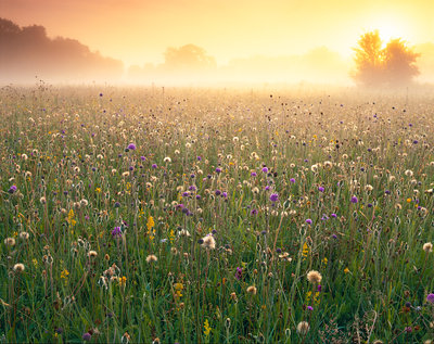Wiltshire Wildlfower Meadow Fine Art Print by Damian Debski