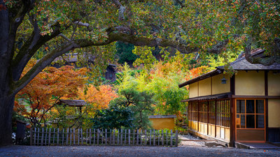 Hakone Garden In Fall Morning Wall Art & Canvas Prints by Jean Li