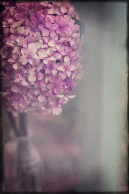 Bohemian Hydrangea Wall Art & Canvas Prints by Heather Runting