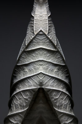 Leaf Sculptures 4 botanical print by Annie Walters