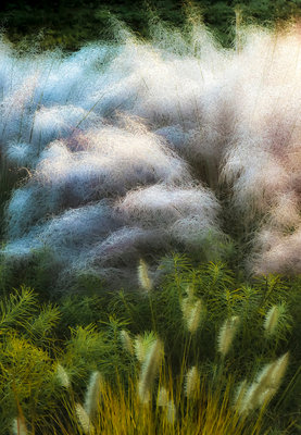 Muhly Grass botanical print by Don Rice