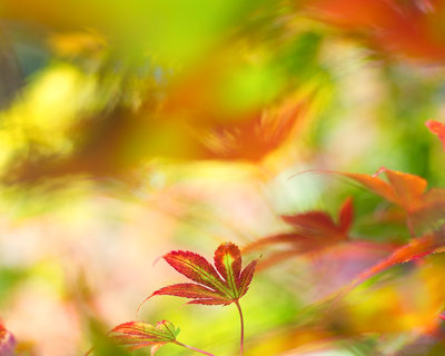 Autumn Pallette Fine Art Print by Sarah-fiona Helme