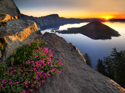 Penstemon Sunrise Fine Art Print by Dennis Frates