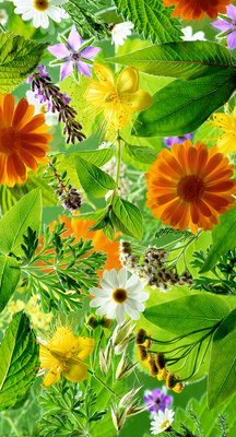 Medicinal Plants Fine Art Print by Carol Sharp