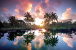 Tropical Garden Sunrise botanical print by Dennis Frates