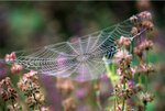 Dewy-covered Spider's Web botanical print by Dennis Frates