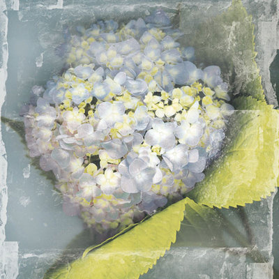 Antique Bloom Fine Art Print by Erin Clark