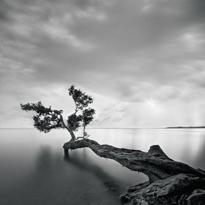Water Tree Fine Art Print by Moises Levy