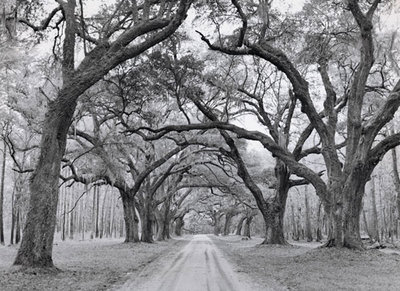 Oak Arches Fine Art Print by Jim Morris