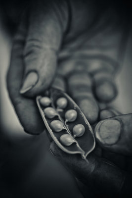The hands that pick the food I eat Fine Art Print by Jason Ingram