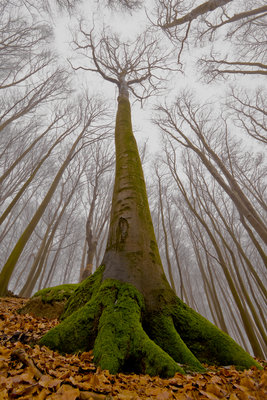 The Beech with a Human Face Fine Art Print by Leszek Paradowski