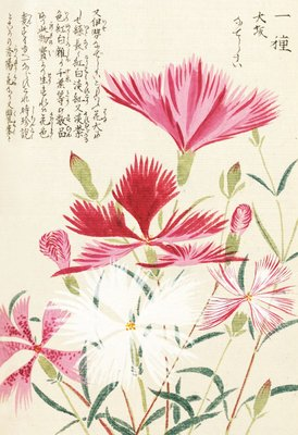 Honzo Zufu [Carnations] Postcards, Greetings Cards, Art Prints, Canvas, Framed Pictures & Wall Art by Kan'en Iwasaki