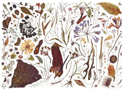 Herbarium Specimen Painting page 1 Fine Art Print by Rachel Pedder-Smith