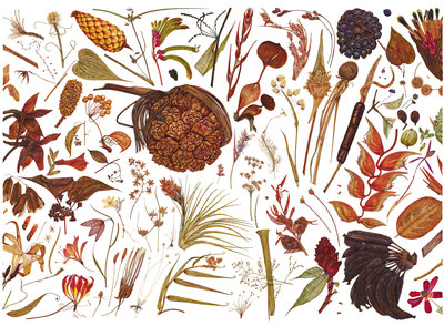 Herbarium Specimen Painting page 2 Fine Art Print by Rachel Pedder-Smith
