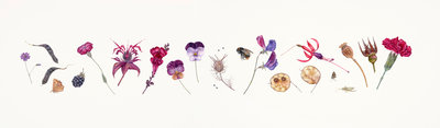 Magenta Flower line botanical print by Rachel Pedder-Smith
