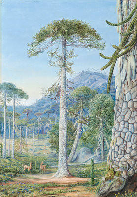 4. Puzzle-Monkey Trees and Guanacos, Chili Postcards, Greetings Cards, Art Prints, Canvas, Framed Pictures, T-shirts & Wall Art by Marianne North