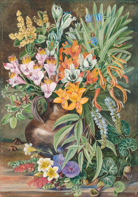 12. Some Wild Flowers of Quilpue Chili. Fine Art Print by Marianne North