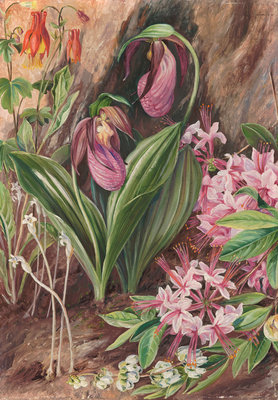 194. Wild Flowers from the Neighbourhood of New York. Poster Art Print by Marianne North