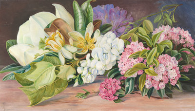 199. Flowers of North American Trees and Shrubs. Poster Art Print by Marianne North
