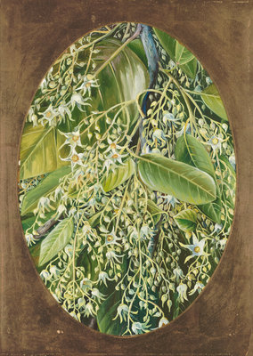 296. Flowers of Sal. Fine Art Print by Marianne North