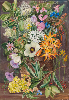 375. Flowers of St. John's in Pondo Basket. Poster Art Print by Marianne North