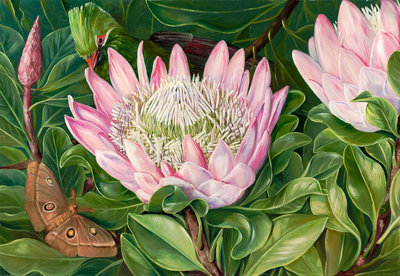 419. Not one Flower, but many in one, Van Staaden's Kloof. botanical print by Marianne North