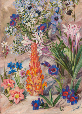 423. A Medley from Groot Post, South Africa. Poster Art Print by Marianne North