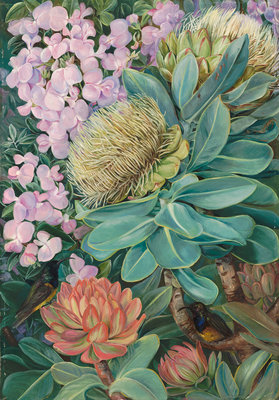 429. Flowers of the Wagenboom and a Podalyria, and Honeysuckers. Fine Art Print by Marianne North