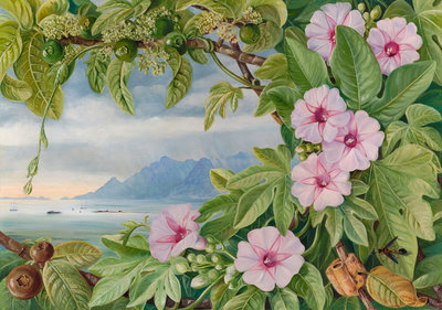 460. Ipomoea and Vavangue with Mahe Harbour in the distance. botanical print by Marianne North