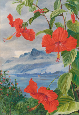 488. Mandrinette and mountain home of the Pitcher Plant in the distance botanical print by Marianne North