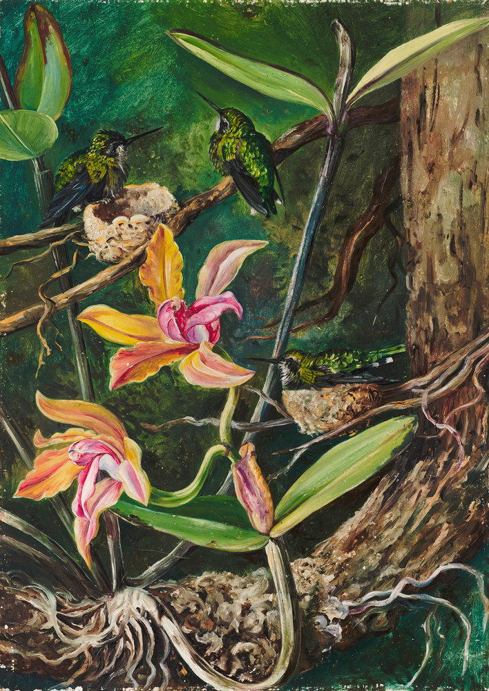 Orchid And Humming Birds, Brazil. Botanical Print By Marianne North