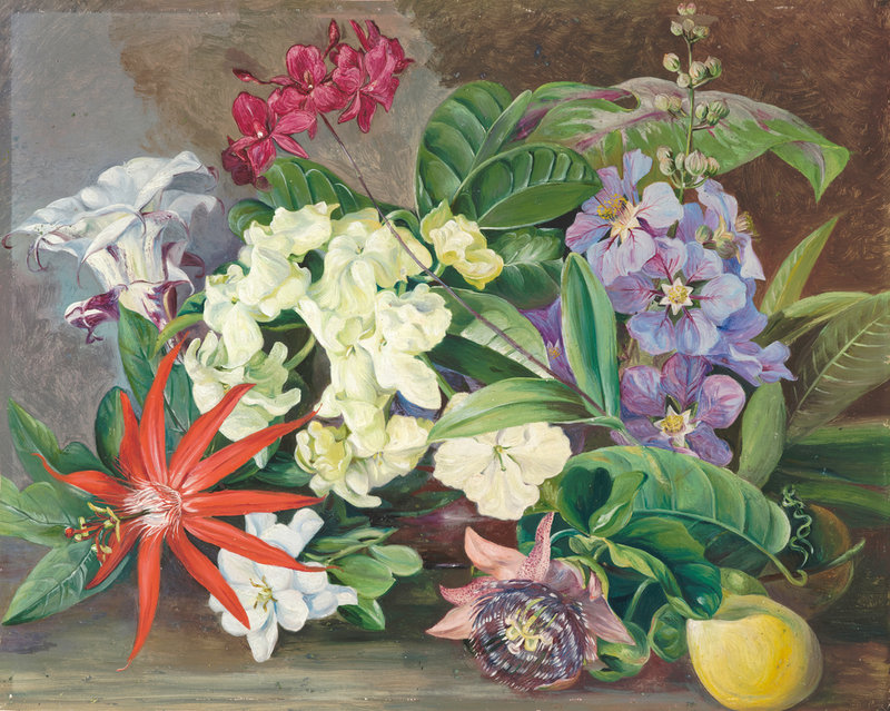 Cultivated Flowers; Painted In Jamaica. Botanical Print By Marianne North