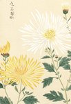 Honzo Zufu [Yellow & White Chrysanths] Wall Art & Canvas Prints by Kan'en Iwasaki