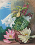 46. Flowers cultivated in the Botanic Garden, Rio Janeiro, Brazil. Wall Art & Canvas Prints by Marianne North