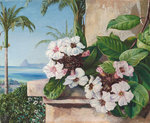 65. Foliage and Flowers of a climbing plant with Royal Palms and Sugarloaf Mountain in the background, Brazil. botanical print by Marianne North