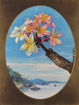 170. Flowers of Jasmine Mango or Frangipani, Brazil. botanical print by Marianne North