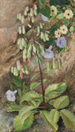 "182. Study of the ""Plant of Life. Fine Art Print by Marianne North"