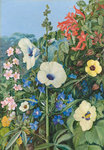 388. Various species of Hibiscus, with Tecoma and Barleria, Natal. botanical print by Marianne North